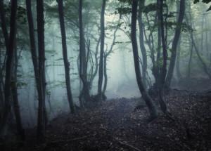 Detalj av usynlig novemberlandskap. Foto: Fotolia